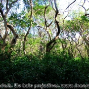 Ratargul Swamp Forest_16