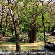 Ratargul Swamp Forest_17