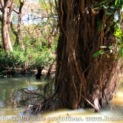 Ratargul Swamp Forest_18