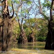 Ratargul Swamp Forest_26