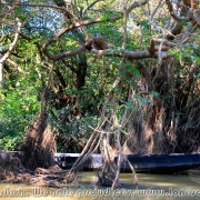 Ratargul Swamp Forest_27