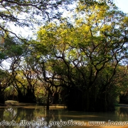 Ratargul Swamp Forest_31