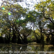 Ratargul Swamp Forest_32