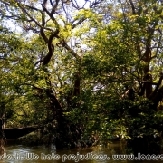 Ratargul Swamp Forest_33