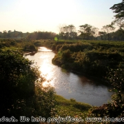 Ratargul Swamp Forest_38