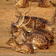 Bangladesh Natinal Zoo_05